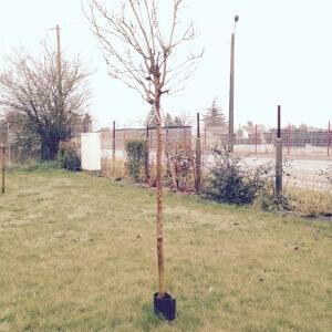 Protection de tronc 1