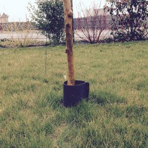 Protection de tronc 2